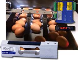Wägezelle und Wägetransmitter von Zemic für Eierwiegemaschine